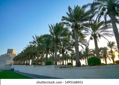The Corniche on Doha, a pedestrian walkway along harbour edge here with tall palm trees lining and Qatar Museum of Islamic Art at end.