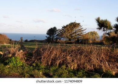 a Cornish field surrounded by trees and hedging at sunset.