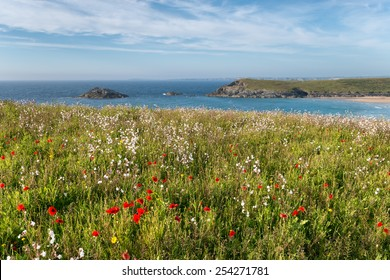 Cornish wildflower meadow on cliffs at Pentire Head near Newquay in Cornwall