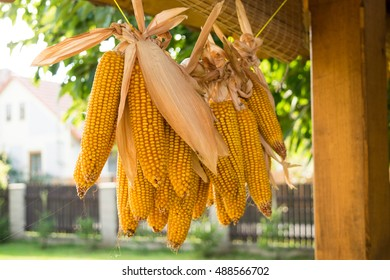 A lot of corns Hung On The Pole, Dry, Corn