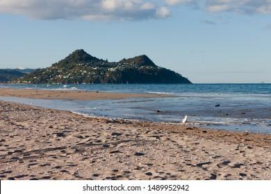 Coromandel coastline seagull. Footprints sand and water