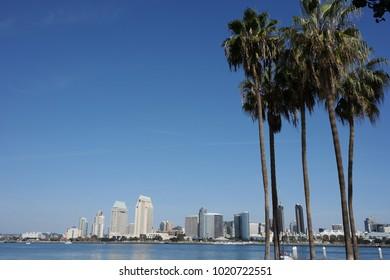 Coronado Palm Trees with San Diego skyline. A lush set of tropical Palm Trees from Coronado Island with the San Diego skyline in the background.