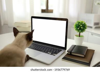 Coronavirus. Femme d'affaires travaillant de chez elle avec chat Concept home quarantaine, COVID-19, situation d'éclosion de Coronavirus