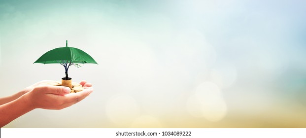 Corporate social responsibility (CSR) concept: Human hands holding stacks of golden coins and green umbrella of tree on blurred nature background