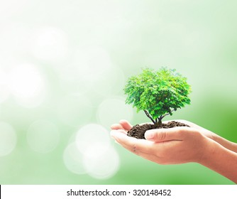Corporate social responsibility (CSR) concept: Human handing heart shape of big tree over blurred abstract beautiful nature background