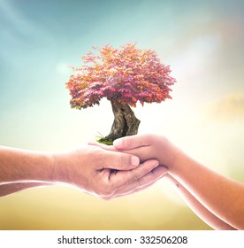 Corporate social responsibility (CSR) concept: Father and son hands holding red tree on blurred nature background