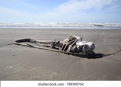Corpose of stingray on the beach