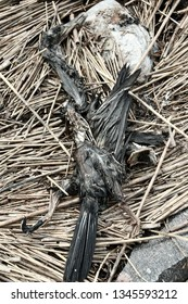 The corpse of a black bird can be a little intimidating as denizen of hell (fiend), creepy. Sea raven
