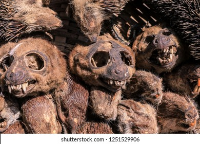 Corpse of the Dead Animal Heads on the Akodessewa Voodoo Fetish Market, Togo, Africa