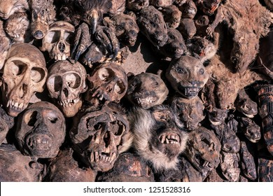 Corpse of the Dead Monkey Heads on the Akodessewa Voodoo Fetish Market, Togo, Africa