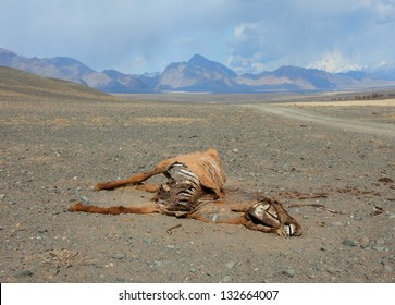 The corpse of a horse in the steppes of Mongolia