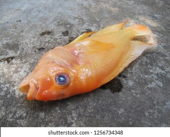 Devil Fish Images, Stock Photos & Vectors | Shutterstock