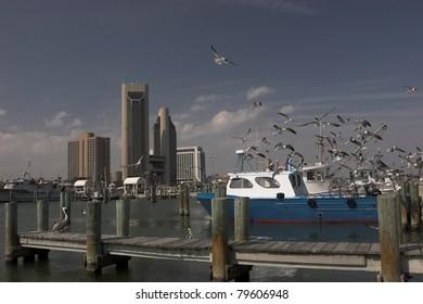 Corpus Christi, Texas harbor with boats, docks and skyline