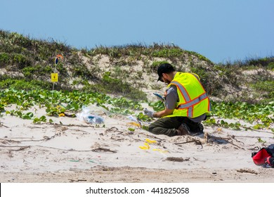 CORPUS CHRISTI, TEXAS/USA - MAY 2016: An unidentified Park Ranger monitors and documents a Kemp's Ridley sea turtle laying a clutch of eggs at Padre Island National Seashore on May 26, 2016.