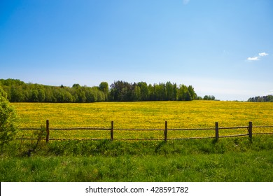 Corral for farm to livestock. Rural view flower meadow and fenced place for walking cows. Pastoral panorama on a paddock. Beautiful landscape of Sunny day. Field yellow dandelions to ruminant cattle.