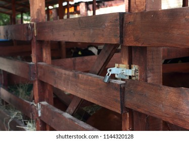 corral on the farm