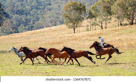 CORRYONG, VICTORIA, AUSTRALIA - APRIL 5TH 2019: The Man From Snowy River Bush Festival re-enactment, a rider on horseback chase wild horses during the re-enactment of Banjo Patterson's epic poem.