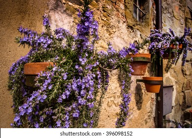 Cortona is one of the most ancient Etruscan town and given the elevated position 600 s.l.m. It enjoys a wonderful view over the whole Valdichiana, flowers of rosemary