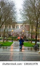 Corvallis, Oregon - 4/6/2019:  A man walking in the rain toward the Memorial Union(student union) on the Oregon State University Campus