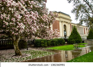 Corvallis, Oregon - 4/6/2019:  Tulip trees in blossom in front of the Memorial Union (student union) on the Oregon State University Campus, Corvallis, Oregon