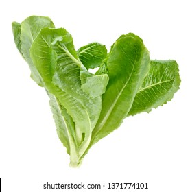 Cos Lettuce on White Background