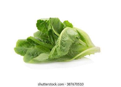 Cos Lettuce on White Background.