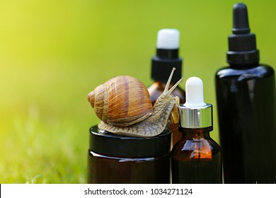 cosmetic with snail mucus.cosmetic set with extract of snail slime and a snails on a wooden cut on a green blurred plant background. snail mucus extract. Natural Cosmetics