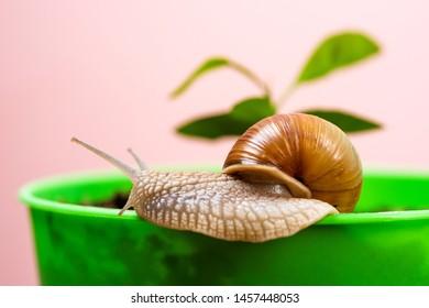Mucus Images, Stock Photos & Vectors   Shutterstock