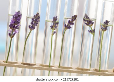 cosmetology lab - Flowers and plants in test tubes