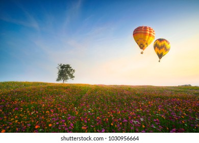 Cosmos flower field, colorful flowers on the hill with colorful hot air balloons, the flower garden in sunset scene
