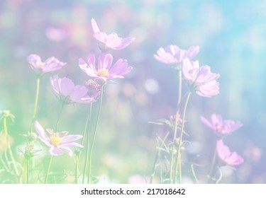 Cosmos Flower soft focus with pastel tones.