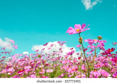 cosmos flowers in retro background , vintage tone