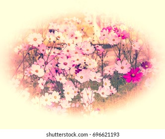 Cosmos flowers in vintage style color effect. Retro image for art and design.