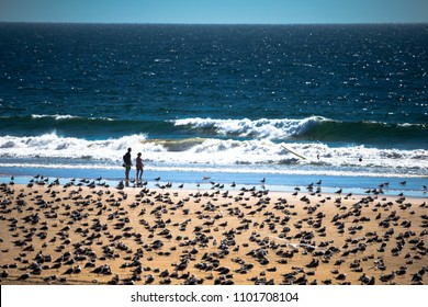 Costa da Caparica, Portugal - Sep 23 2016: Couple surrounded by seagulls watching surfers
