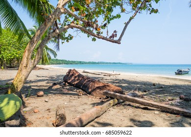 Costa Rica Beach Palm Trees Caibbean Tourism Tourist Paradise Destination Puerto Viejo Caribbean Turquoise Water Beatiful Beach Travel Mazazine Cover Relaxation Vacation Jamaican Paradise Rasta Oacean