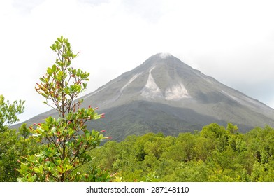 Costa Rica's Arenal Volcano in background with budding plant in foreground