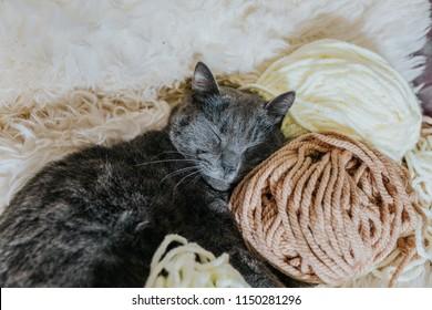 Cosy grey cat sleeping on soft wool knitting yarn, loving yarn balls