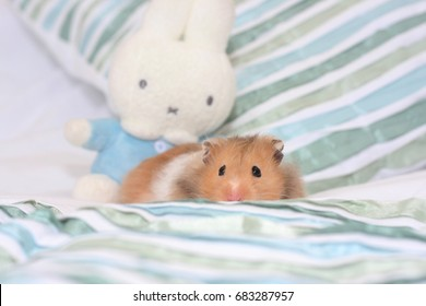 Cosy Hamster