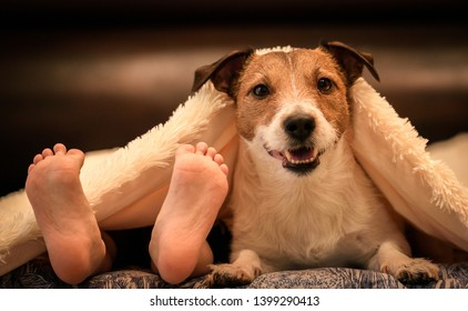 Cosy and humor scene with human kids foots and adorable dog under duvet on bed