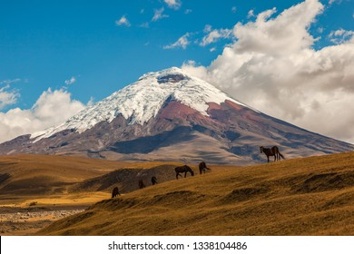 Cotopaxi, an active volcano, at sunset with horses in the foreground