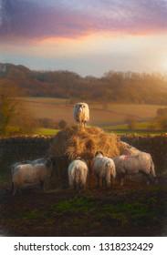 Cotswold Sheep (Painterly)