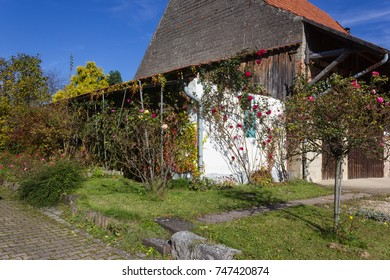 cottage architecture at indian summer month october with autumn colors of roses ranking on facades and churche in background