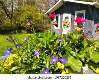 Cottage at Collingwood during spring time