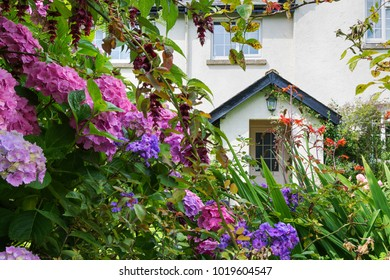 Cottage front garden with colorful wild flowers, Debon, England.