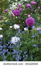 Cottage garden with perennials