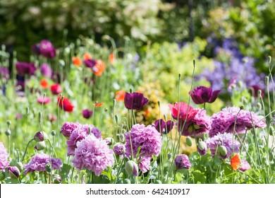 Cottage Garden with wild flowers
