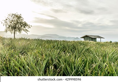 Cottage in pineapple Farm with mountains in thailand on the overcast rain
