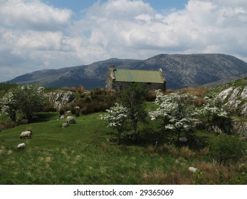 Cottage with sheep in Ireland mountains