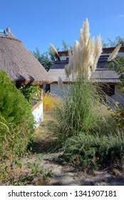 Cottages and reed in Danube Delta in summer time