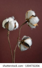 Cotton branches in vase on brown background